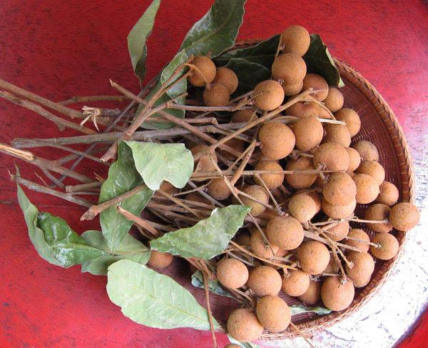 Lam Yai (Longen); Lamphun