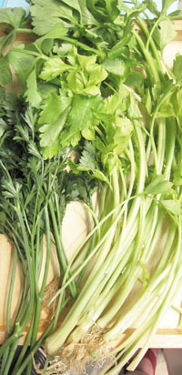 Chinese celery& broad leaf parsley